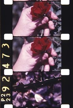 Jonas Mekas  Filmed on Staten Island, 1980,2013