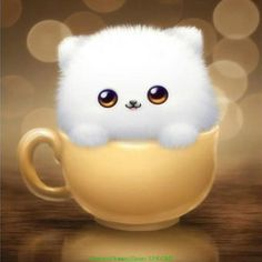 Best value Cute White Kittens – Great deals on Cute White Kittens from global Cute White Kittens sellers Cute Animal Drawings, Cute Drawings, Cute Images, Cute Pictures, Images Photos, Free Photos, Image Panda, Hd Cute Wallpapers, Teacup Cats