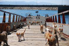 Aoshima Island, uma das ilhas de gatos do Japão (foto: jnto.go.jp/Divulgação) - Fornecido por Viagem em Pauta