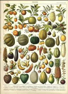 FRUITS 1 Vintage French Color Illustration 1904 by FolieduJour on Etsy