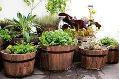 kitchen garden #jardins #gardens #decor