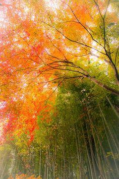 autumn colour - JAPAN