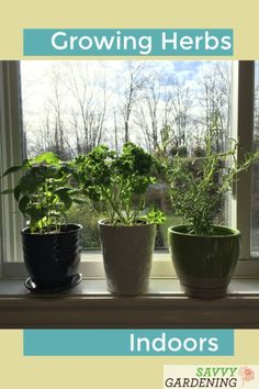 diy herb garden Plant an Herb Garden for a Kitchen Window and Grow Herbs Year-round Kitchen Garden Window, Kitchen Plants, Garden Windows, Fenced Vegetable Garden, Diy Herb Garden, Garden Pests, Herbs Garden, Growing Herbs Indoors, Growing Veggies