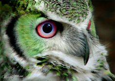 incredible critters | Pin it Like Image