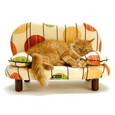 kitty's own sofa