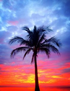 Glorious red sky sunrise by the beach palm courtesy @FtLauderdaleSun.