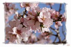 Recetas de primavera