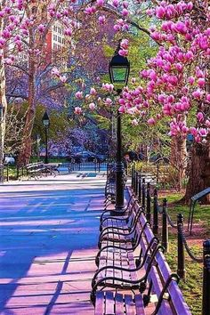 Spring in Central Park Beautiful Streets, Beautiful Park, Beautiful Places, Beautiful Pictures, Spring Photography, Park Photography, Central Park, Places To Travel, Places To Go
