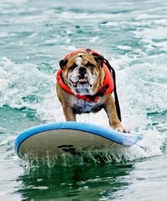 Hit those big waves, Bulldog!