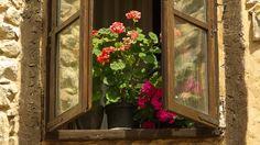 Sedir Ağacı: Penceremin Fantastik Düşü