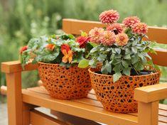 Love orange! Orange dahlias in pots is so much fun!