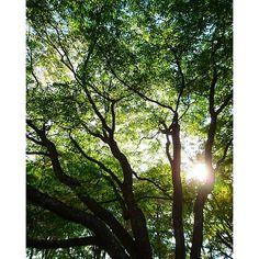 【haru_3_clan_】さんのInstagramをピンしています。 《木漏れ日  #北海道 #木漏れ日 #木洩れ日 #森林 #緑》