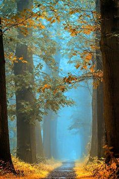 Orange Blue Avenue by Lars Van de Goor Photography Beautiful World, Beautiful Places, Beautiful Pictures, Landscape Photography, Nature Photography, Travel Photography, Smoke Photography, Better Photography, Funny Photography