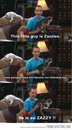 Sheldon's cat…