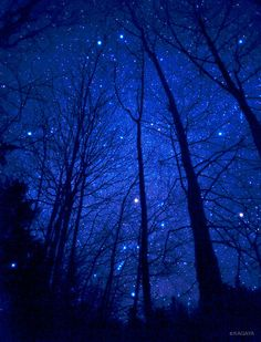♥ Starry Night - the beauty of a Winter's Night, with the fire and ice of a starry sky ...