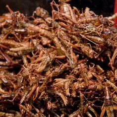 If Westerners begin to eat insects alongside chicken and beef, will bug farms be held to the same standards as sustainably grown animals? I spoke to one Ohio-based cricket farmer to figure out how he's raising noisy creatures for human consumption. Edible Insects, Bugs And Insects, Cricket Farming, Insect Eggs, Meal Worms, Wild Game Recipes, Whats For Lunch, Beneficial Insects, Insects
