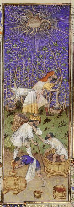 Psautier de la reine Marie, ca. 1310 Vendanges à la main Grandes heures de Rohan, Anjou, vers 1430 Harvesting grapes & treading grapes for wine
