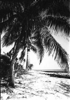Beach with palm and Cape Florida Lighthouse - Gleason Waite Romer Photographs - Miami-Dade Public Library System Digital Collection Cape Florida Lighthouse, Miami, Palm, Photographs, Public, Tower, Digital, Beach, Outdoor