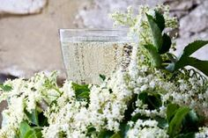 Andy Hamiton's delicious alcoholic elderflower champagne Life and style The Guardian Best Gin Cocktails, Gin Cocktail Recipes, Spring Cocktails, Elderflower Champagne, Champagne Recipe, English Wine, Homemade Wine, Gin Fizz, Samos