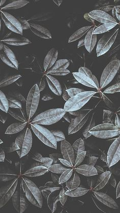 12 Botanical iPhone Xs Max Wallpapers   Preppy Wallpapers