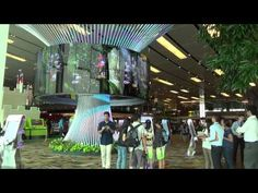 The Social Tree - Changi Airport - YouTube