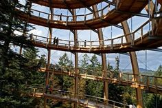 Breathtaking tree top walk in the Bavarian Forest National Park