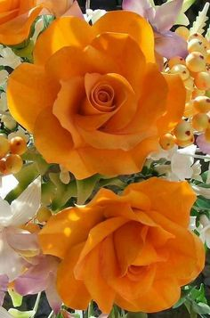 Low Cost Flowers Shipping And Delivery - An Anniversary Reward Without A Significant Selling Price Tag Rosas Anaranjadas Orange Roses - Beautiful Rose Flowers, Flowers For You, Amazing Flowers, Pretty Flowers, Flowers Nature, Orange Flowers, Yellow Flowers, Red Roses, Color Yellow