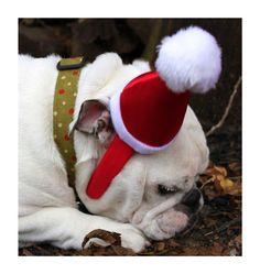 Christmas Bulldog