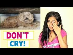 Try Not To Cry: Dog's owner died, he was left behind. Watch what happens...