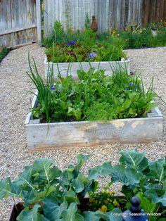 Vintage kitchen garden with vegetables