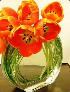 circular stems in clear vase