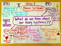 Body Systems. Driving question, what do we know about our body systems?