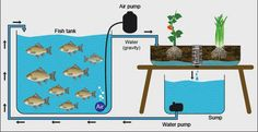Advancing aquaponics development in Indonesia| FAO | Food and Agriculture Organization of the United Nations