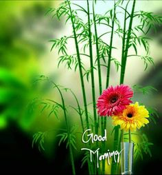 different good morning greetings