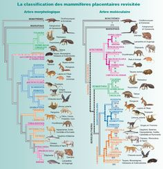 Classification of Mammals : Notions of taxonomy | Mammals'Planet