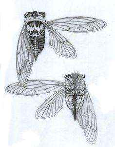 cicada diagram inspiration by Justin Overholt