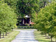 Willow Oaks line the gravel drive up to the manor, creating a more formal approach.
