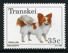 Papillon (Canis lupus familiaris)