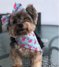 Kit Bandana Pet + Bow for dog fashion in Baby Dogs, Pet Dogs, Puppy Bandana, Yorkshire Terrier Dog, Pet Boutique, Pet Fashion, Fashion Clothes, Love Pet, Diy Stuffed Animals