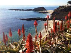 Vacation in Paradise! - vacation rental in Laguna Beach, California. View more: #LagunaBeachCaliforniaVacationRentals