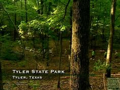 Tyler State Park, Texas      Dang, looks like my childhood backyard, no joke!! More Sas-Akrana forests.
