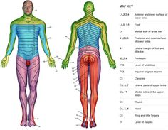 Dermatome man.  Really like the map key on the side.