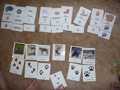 Forest Animal Tracks | The Homeschool Den...for Sacagawea