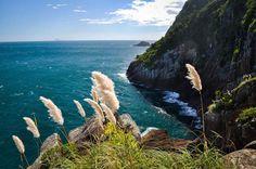 PLUMA from Rio de Janeiro (RJ)-Santos(SP) Preserve