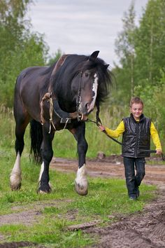 The breed was developed in early c. farms and collectives east of Moscow by crossing local peasant horses with Clydesdale, Shire, Suffolk, and others. Big Horses, Work Horses, Cute Horses, Beautiful Horses, Animals Beautiful, Pretty Horses, Animals Of The World, Animals For Kids, Largest Horse Breed