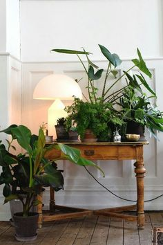 Plant decor Table - June inspiration Cozy, chic and green (The Decorista). - Plant decor Table – June inspiration Cozy, chic and green (The Decorista)… Plant decor Table – June inspiration Cozy, chic and green (The Decorista)… Large Plants, Green Plants, Decoration Inspiration, Interior Inspiration, Decor Ideas, Indoor Garden, Indoor Plants, Plant Table, Table Lamp