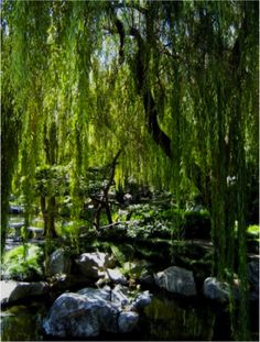Cute willow water action.