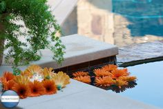 More swimming pool decorations - votives surrounded by orange daisys
