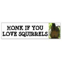 HONK IF YOU LOVE SQUIRRELS BUMPER STICKER
