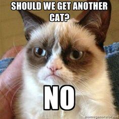 Grumpy Cat 1 - SHOULD WE GET ANOTHER CAT? NO